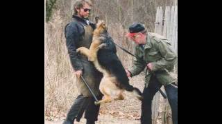 Audio-vid Of Backcover - Natural Dog Training Ndt