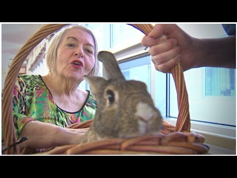 Halifax retirement home seeks 'therapy bunny' handler | CBC News