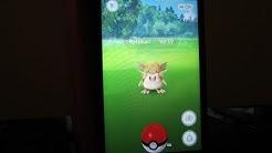 Pokemon GO * AR Modus Fehler/Problem * Pokemon nicht sichtbar