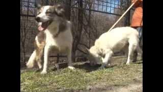 Бездомные собаки. Собака-инвалид. Ищу хозяина