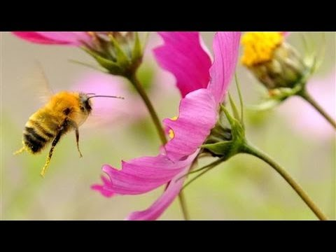 Study Links Pesticides With Bee Colony Collapse
