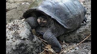 Hallan tortuga gigante que se creía extinta hace 100 años