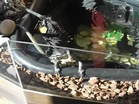 Indoor Turtle Pond My 1st Ever Vid Youtube