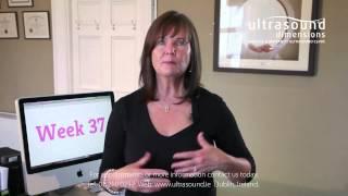 37 Weeks Pregnant - Your 37th Week Of Pregnancy screenshot 1