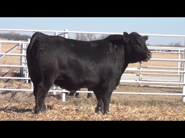 Express Ranches Lot 117
