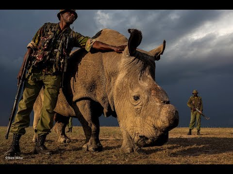 Brent Stirton on winning Power of Photography Award