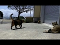 カメラ見て集まってきた猫島の猫「なんだ餌じゃないのか」で昼寝に戻る