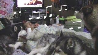 就寝前に必ず家内の布団やベットに集合してダラダラ過ごします。 アリス...