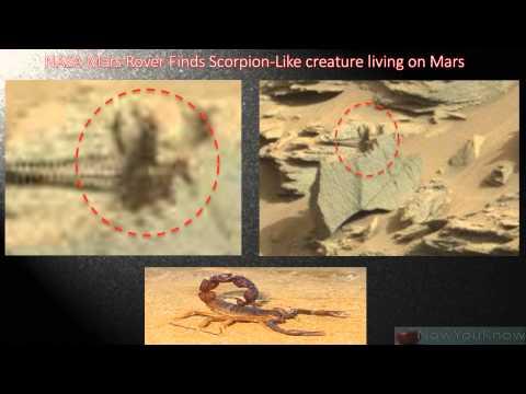 NASA Mars Rover Finds Scorpion-Like Creature Living On Mars