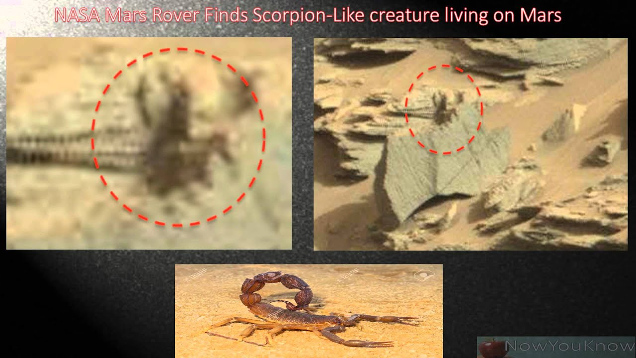 mars rover finds animal - photo #9