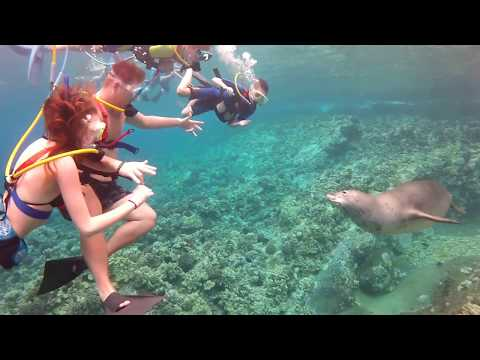 SNUBA encounter with a Monk Seal at Molokini Crater
