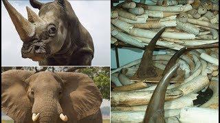 10 видов животных, которые могут исчезнуть уже через несколько лет! Мы их больше не увидим!