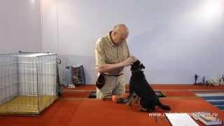 Как защитить собаку от клещей и блох