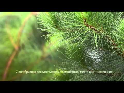 Мальва (трава) – полезные свойства и применение мальвы