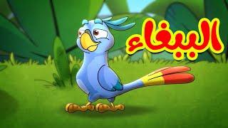 الببغاء - طيور بيبي