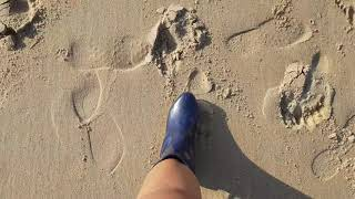 수면유도 | 가을 | 만리포 ✦ 썰물 따라 바다로, 바…