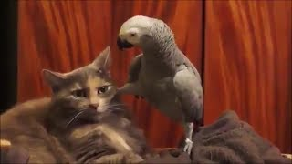 Funny cats #17