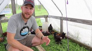 Are small farms sustainable?