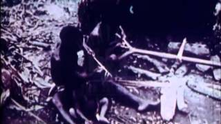 Pygmies, 1970's - Film 30868