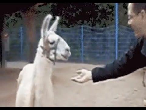 Тупой и еще тупее (1994) смотреть онлайн или скачать фильм