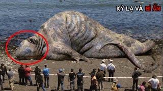 10 con thủy quái khủng nhất Thế Giới thật không thể tin nổi