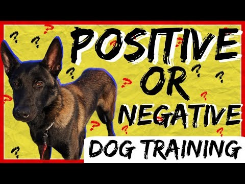 Should I use Positive or Negative Dog Training? Positive Punishment?