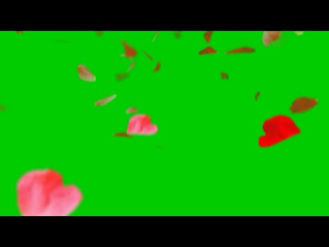 Green screen flower animation HD fx effect with sound #2. Flowers petals falling Green screen. thumbnail