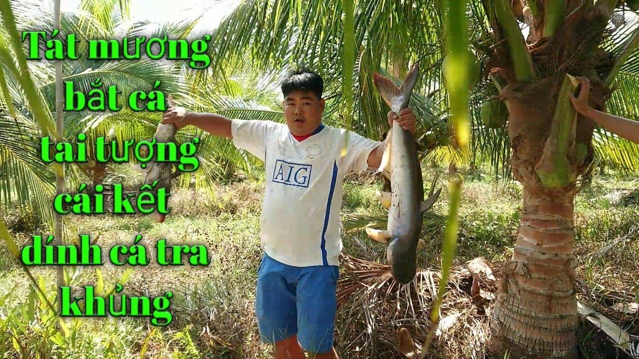 Tát mương bắt cá tai tượng   cái kết cá tra khổng lồ   cuoc song o que