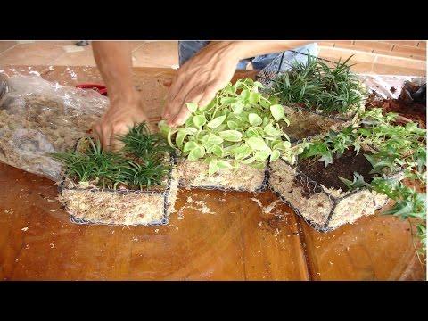 Curso de Topiaria e Mosaicultura - Manutenção das Plantas - Cursos CPT
