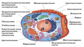 Биологическая клетка (рассказывает биолог Евгений Шеваль)