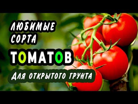 Как я выбираю сорта томатов и томаты, которые мне понравились в сезоне 2019 года.