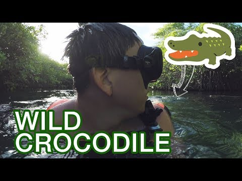 Wild Crocodile Sneaks Up On Us In Tulum Mexico
