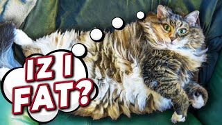 Is My Cat Overweight? | Advice From A Vet