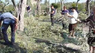 Raccolta delle olive all'interno del Camping Nube d'Argento