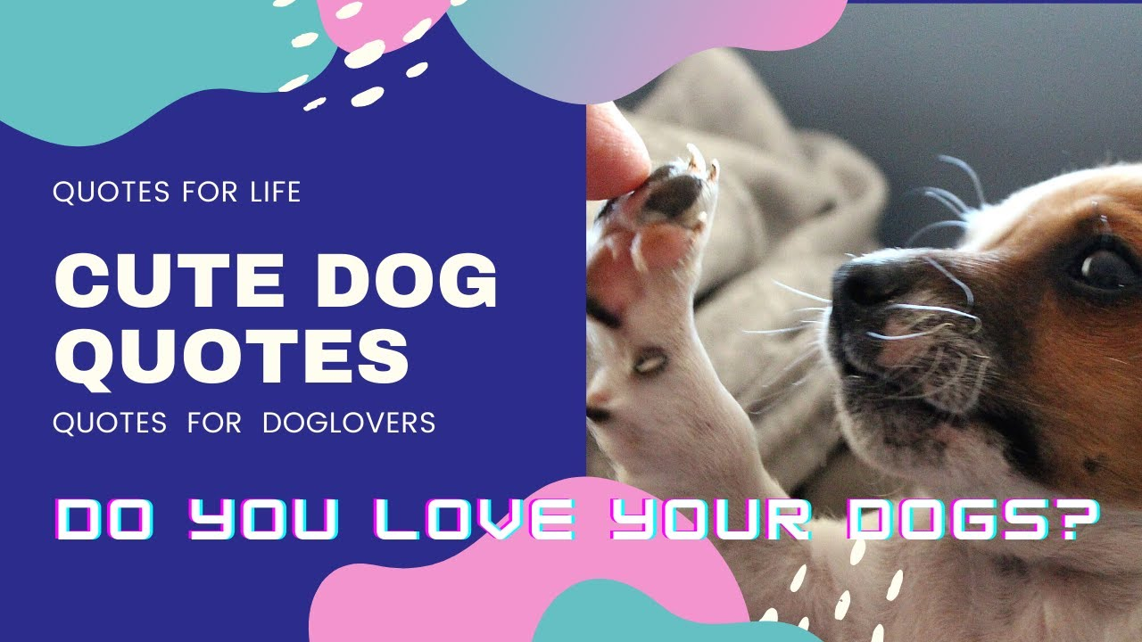 Do You Love Dogs Handpicked Amazing Quotes About Dogs Youtube