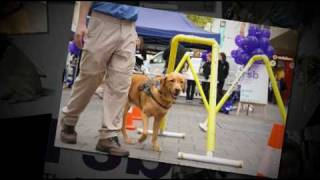 Celebrate International Guide Dog Day 2011 With The Rsb