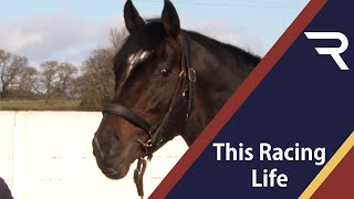 This Racing Life - Shade Oak Stud - Racing TV