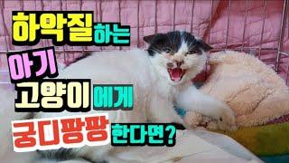 하악질하는 아기고양이에게 궁구팡팡  하면 생기는일, 고양이 하악질 이유, 하악질 소리, 고양이 궁디팡팡, kitten, stray cat