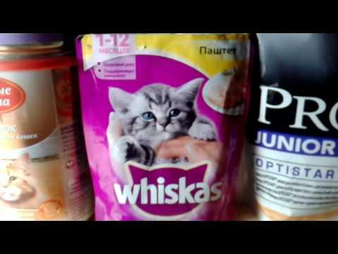 Покупки из зоо для собаки и кошек