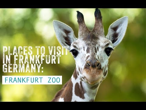 Places to visit in Frankfurt - Germany: Frankfurt Zoo