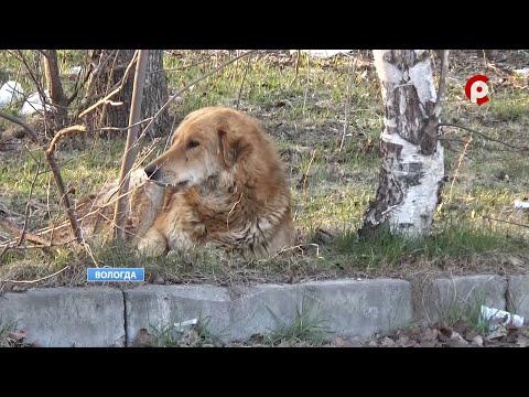 Продолжение истории с расстрелом собаки в Вологде