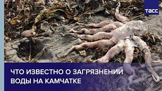 Что известно о загрязнении воды на Камчатке