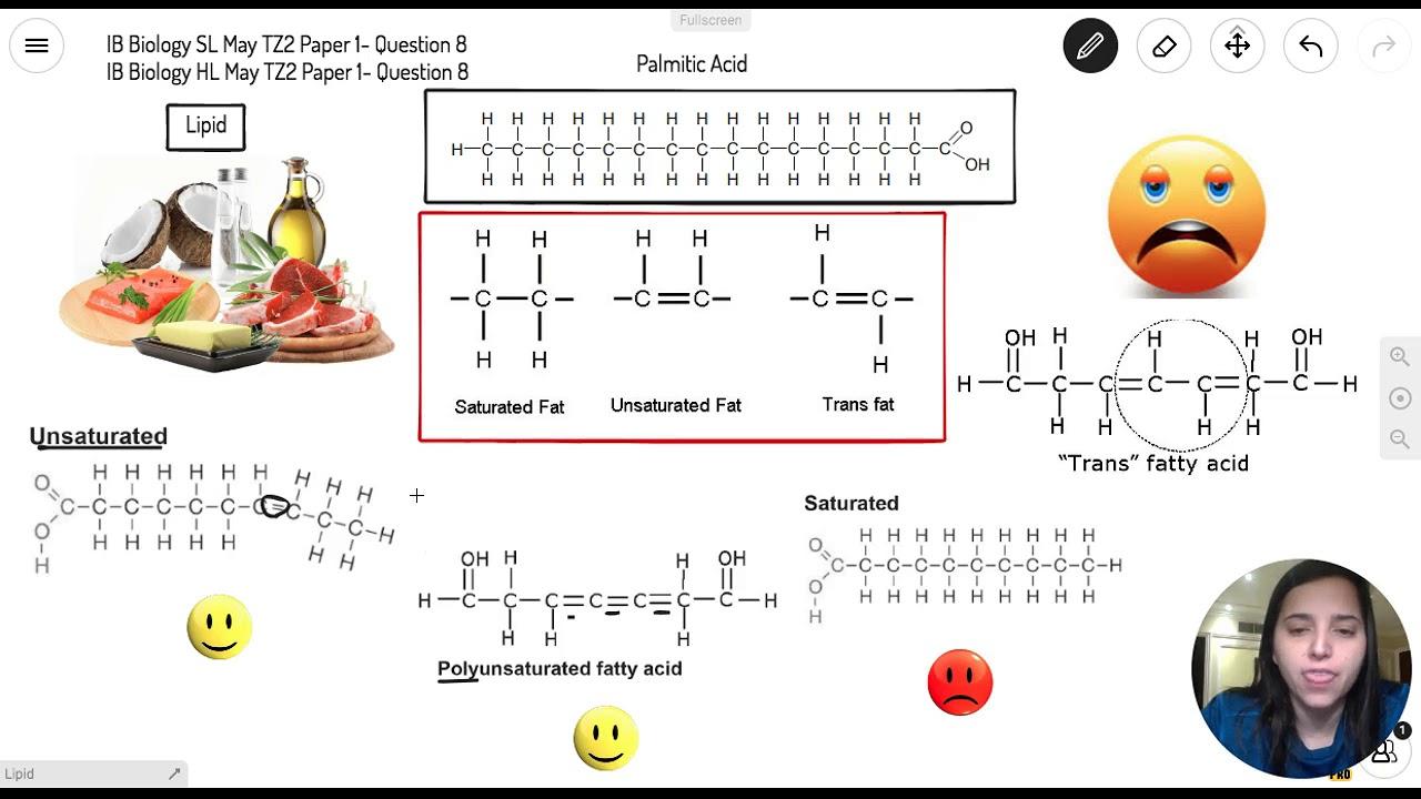 Question 8 — IB Biology SL — May 2017 TZ2 Paper 1 — Past IB Exams Solutions