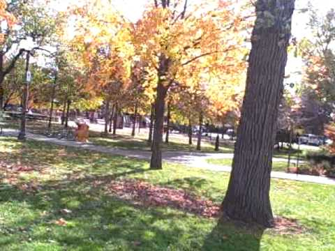 Northbrook, Illinois - The Park and Little Louie's