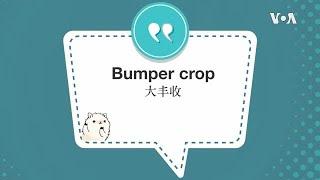 学个词--Bumper crop