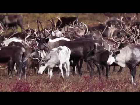 Itelmen and reindeer herding Kamchatka Russia