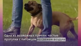 Ученые выяснили, что владельцы собак живут дольше