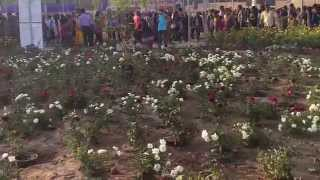 Flower Show 2015 - Ahmedabad River Front (part 5)