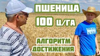 Как достичь 100 цга пшеницы