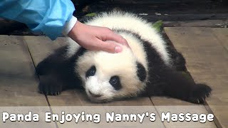 So Cozy! Panda Enjoying Nanny's Massage | iPanda